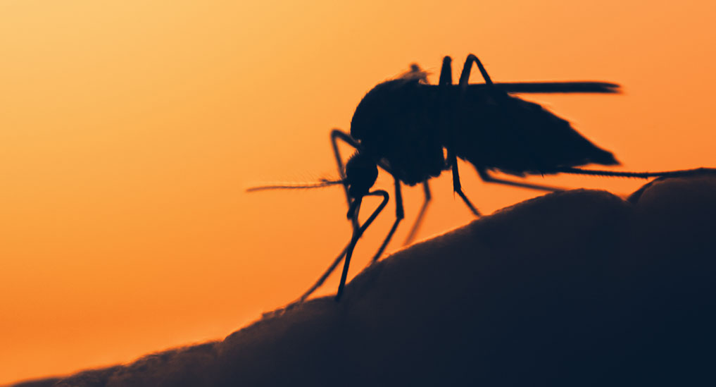 EDCTP to invest €44m to develop new treatments to combat drug- resistant malaria in Africa