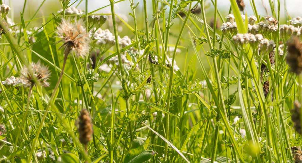 Sublingual tablet to treat grass pollen allergy