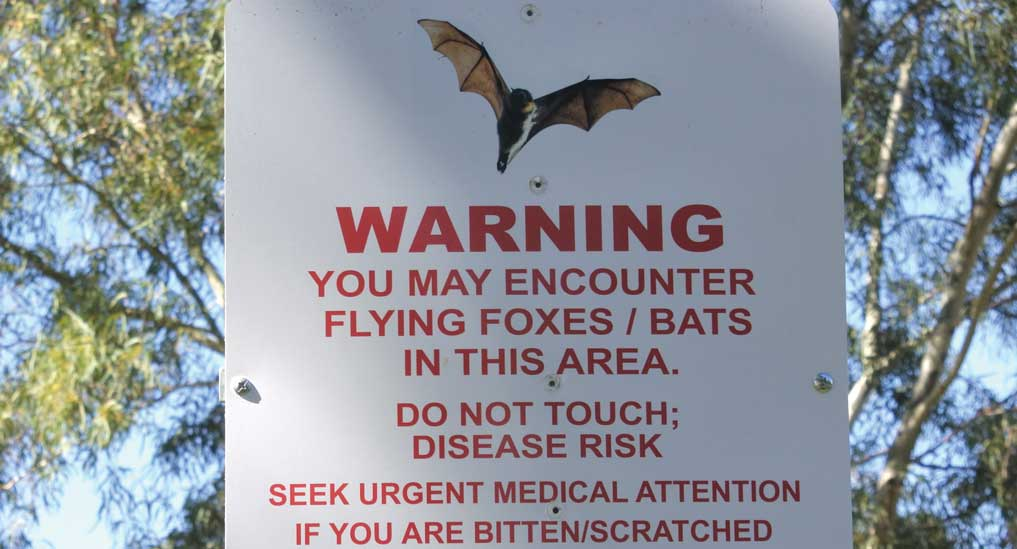 Nipah virus — Unbound and unpredictable