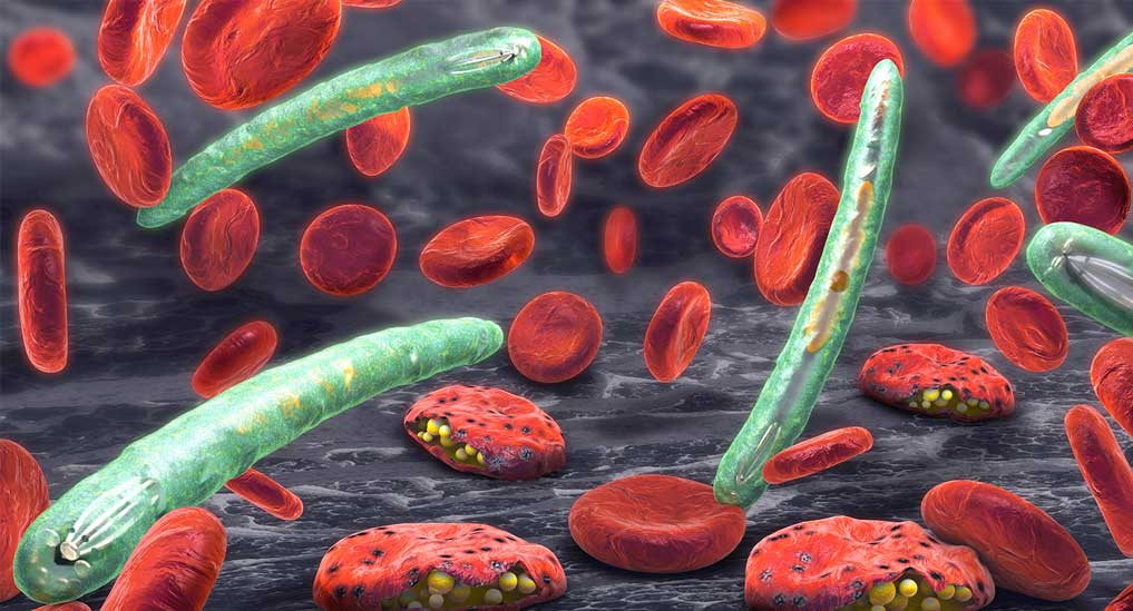 GDH could be a new biomarker for malaria