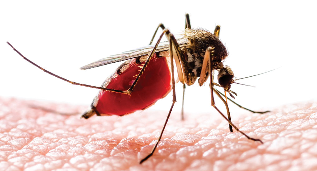Novel vaccine  effective in people without prior dengue