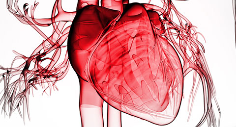 Empagliflozin proved reducing heart failure with preserved ejection fraction