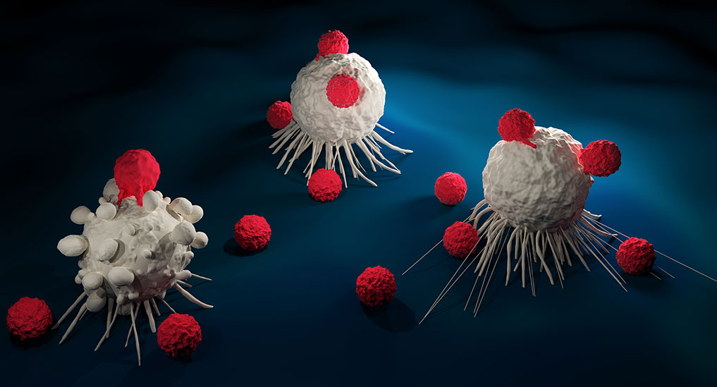 US FDA okays phase 1 study of gamma delta T cell therapy for non-Hodgkin's lymphoma