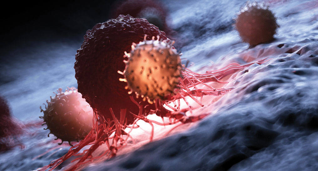MIT researchers find new drug combo to treat pancreatic tumours