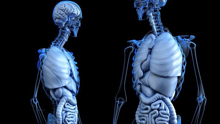 Researchers make astonishing discovery about the human gut's enteric nervous system